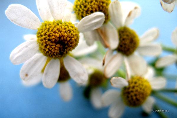 Challenge___Flowers_by_Daniel_R