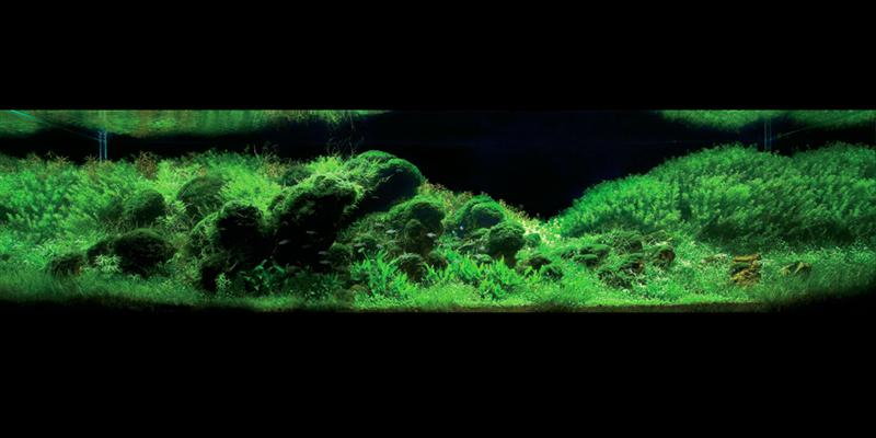 Aquascape 3 (Medium)