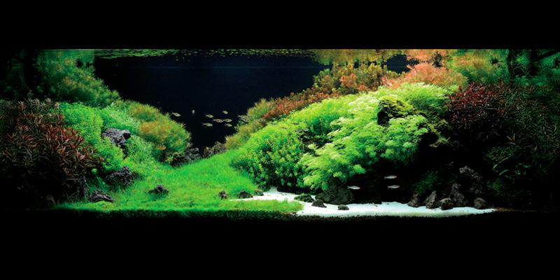 Aquascape 4 (Medium)
