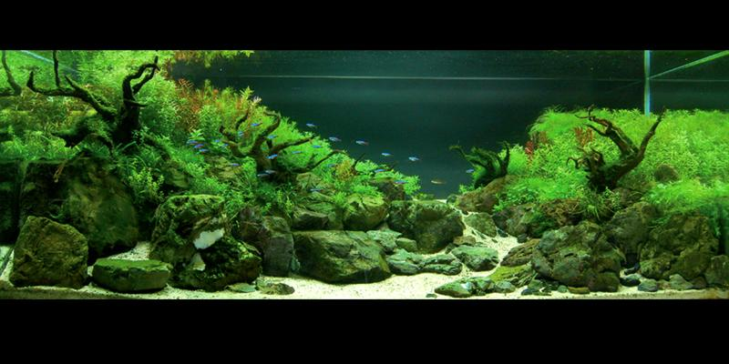 Aquascape 5 (Medium)