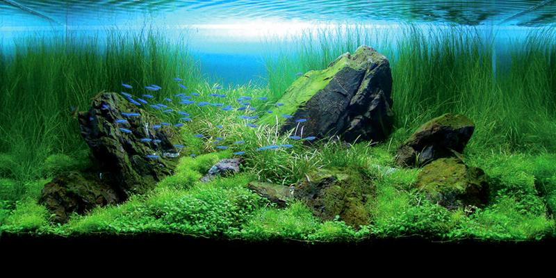 Aquascape 6 (Medium)