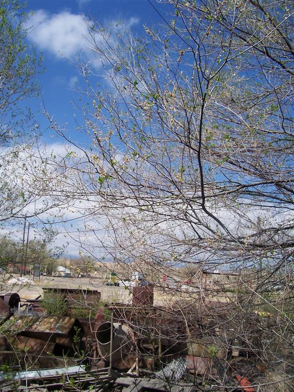 April 28, 2009 119 (Large)